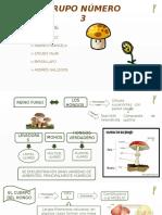 Biologia Fung i Plantae
