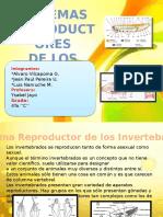 sistemareproductoresdeanimales-121124204959-phpapp01