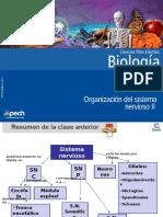 Organización Del Sistema Nervioso II