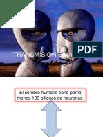 3- Transmisión sináptica