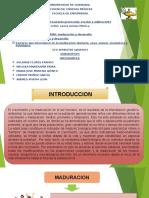 MADURACION-Y-DESARROLLO-LACTANCIA. (1)