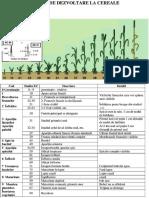 01 Stadiile de Dezvoltare La Cereale