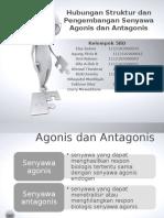 Hubungan Struktur dan Pengembangan Senyawa Agonis dan Antagonis.pptx