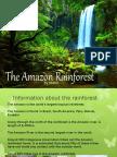 the amazon rainforest storyboard