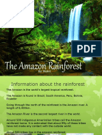 the amazon rainforest storyboard