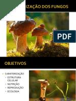 Caracterização Dos Fungos