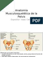 Anatomía Musculosquelética de La Pelvis