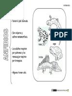 Animales-vertebrados-Anfibios.pdf