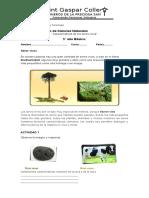 guc3ada-de-repaso-5-caracteristicas-de-los-seres-vivos.doc