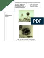 Ficha Bacteria y Virus