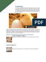 Aves y Huevos en Guatemala