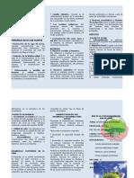 Triptico Desarrollo Sostenible Listo