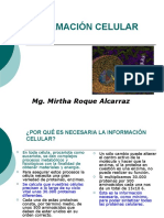 Nucleo 2015 MRA 8