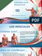 Los Músculos