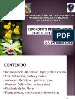 Clase Esporofito Reproductor - FLOR E INFLORESCENCIA -Eva Ramos(Semana 10)