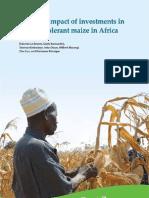 Drought Tolrant Maize Cimmyt