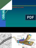 Biología Celular (II Unidad) A1