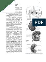 Apuntes Anatomía Urogenital