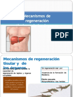 mecanismosderegeneracintisularydelosrganos-130318144905-phpapp02+(1).pptx