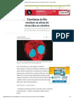 Cientistas Do Rio Revelam Os Alvos Do Vírus Zika No Cérebro