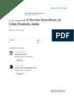 Bovine Brucellosis Uttar Pradesh