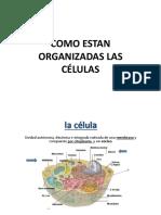 2 Organizacion Celular