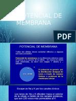 Diapositivas Potencial de Membrana