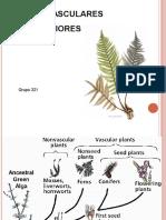 plantas-vasculares-inferiores.ppt
