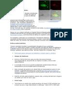 Beta-Amiloide e Proteina Tau - Jr.alves.silverio