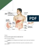 Parte 1 Digestion