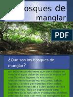 Bosques de Manglar (1)