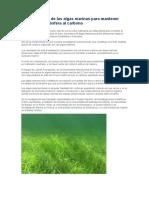 La Importancia de Las Algas Marinas Para Mantener Fuera de La Atmósfera Al Carbono