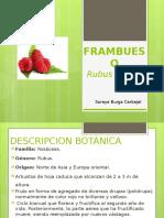 FRAMBUESO
