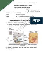 Sistema Digestivo Glándulas Anexas Final