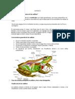 16. ANFIBIOS-Especialidad Desarrollada