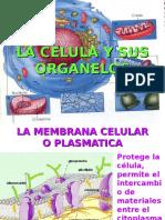 LA CELULA Y SUS ORGANELOS UNSAAC.ppt