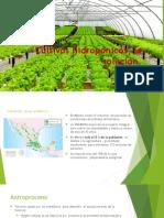 Cultivos Hidropónicos, La Solución