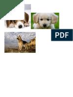 Alimentos No Recomendados Para Los Perros EEXPFERIA CTAA