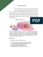 Tipus Tonsilitis