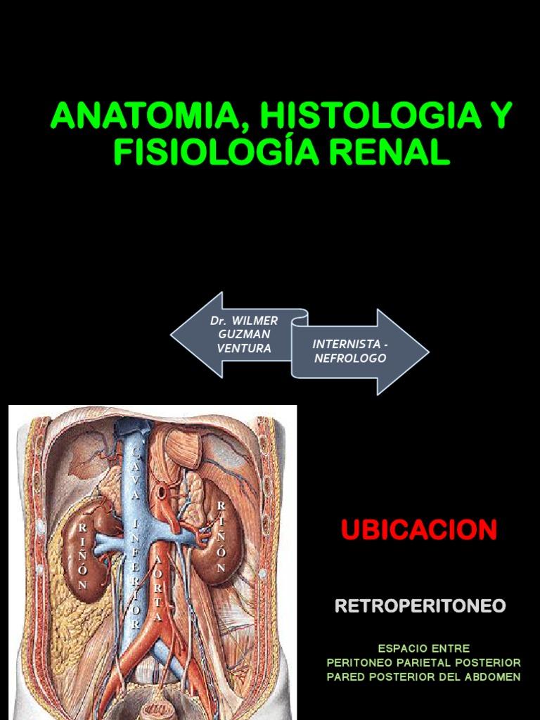 Famoso Definir La Fisiología Anatomía E Histología Foto - Imágenes ...