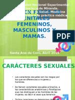 Seminario de Genitales Diapostivas Finales