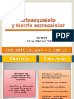 Clase 11- Citoesqueleto y MEC