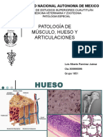 Patología muscular, ósea y articular