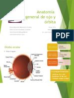 Anatomía de ojo y órbita