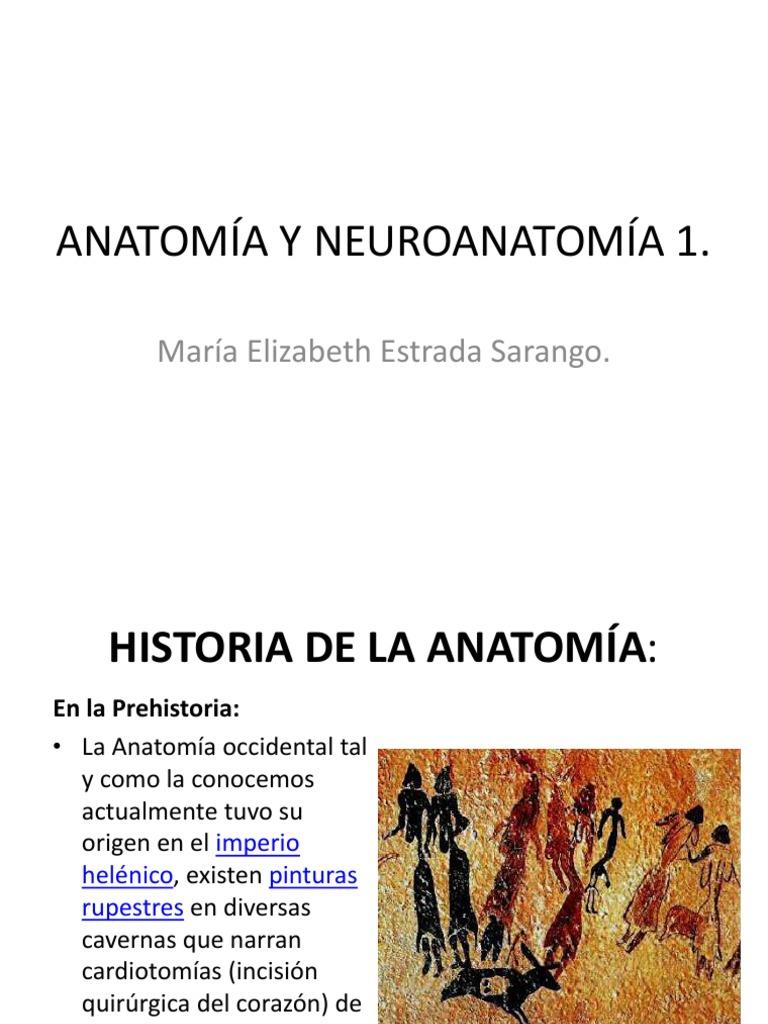 ANATOMÍA Y NEUROANATOMÍA.pdf