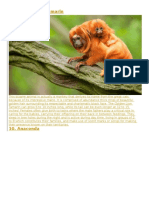 Amozon Plants and Animals.docx