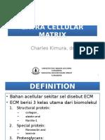 Extra Cellular Matrix Colagen