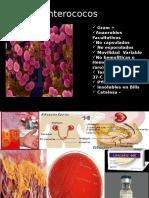 Enterococos spp.pptx