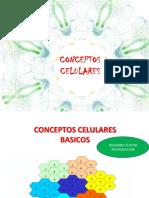 3CONCEPTOS CELULARES1