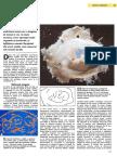 Fatul.pdf